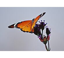 Butterfly touch Photographic Print