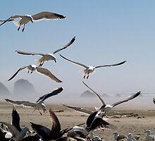 Flock of Seagulls by maggiebarra