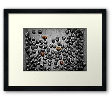 Always one or two in a crowd..... Framed Print