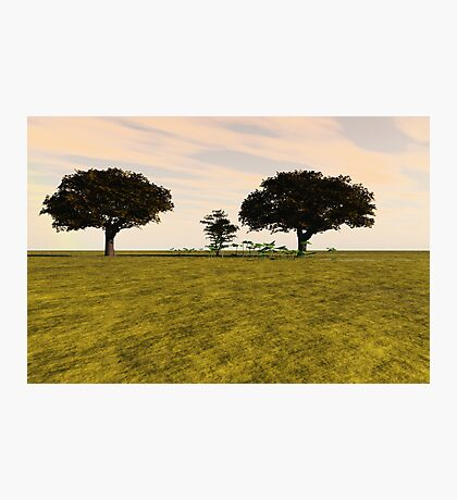 Tranquil Meadow Photographic Print