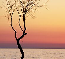 evening colors by babha