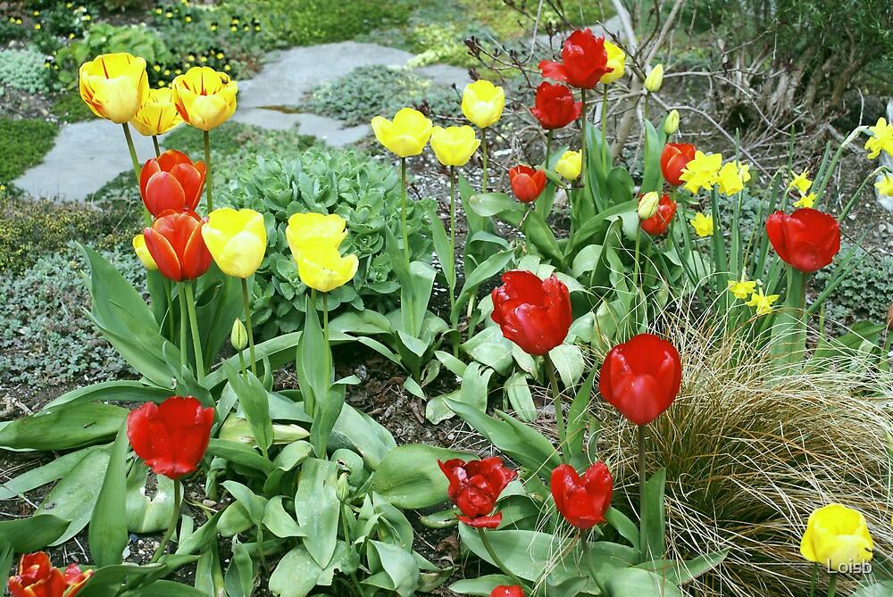 A Tulip Garden by Loisb