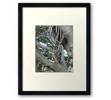 Tree in a Twist Framed Print