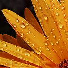 Spring Rain by Scott A. Ray