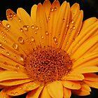 Flower for Jen by Scott A. Ray