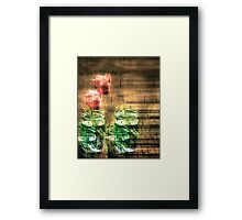 Canned Tulips  Framed Print