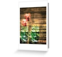 Canned Tulips  Greeting Card