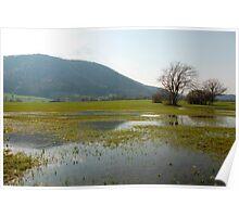 Slovenian Wetlands Poster