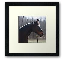 Trusted Steed Framed Print