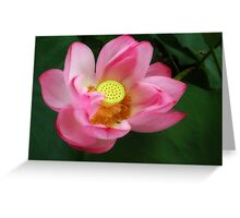 Creamy Lotus Greeting Card