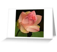 Peach Colored Lotus Greeting Card