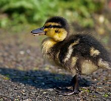Mini Mallard by Krys Bailey
