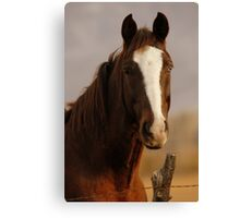 Horse - Two-tone Eyes Canvas Print