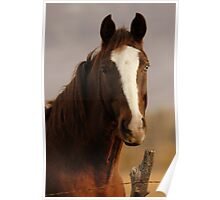 Horse - Two-tone Eyes Poster
