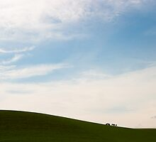 Pembrokeshire Cows by Paul Davey