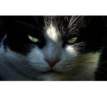 Jeff Lemowski: Top Cat Photographic Print