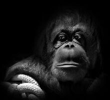 Orangutan by whiterussian