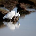 Snowy Egret by LjMaxx