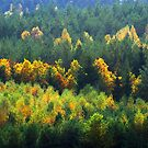 View of the forest in autumn colors by renifer