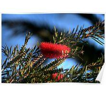 blooming bush Poster