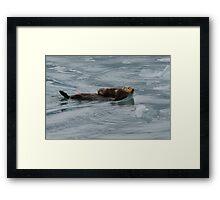 Sea Otter & Pup Framed Print
