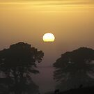 Here comes the sun. by Eunice Atkins