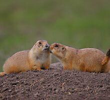 Prairie Dog Kiss by William C. Gladish