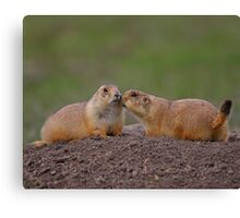 Prairie Dog Kiss Canvas Print