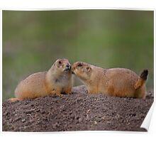 Prairie Dog Kiss Poster