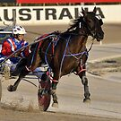 Harness racing by Cathy Grieve