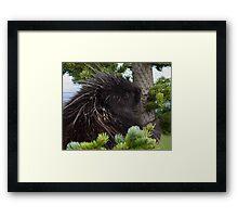 Porcupine Hug Framed Print