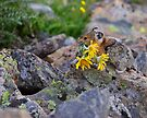 Pika Carrying Wildflowers by WorldDesign