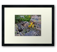 Pika Carrying Wildflowers Framed Print
