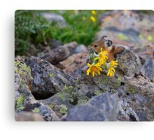 Pika Carrying Wildflowers Canvas Print