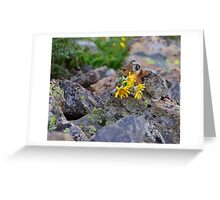 Pika Carrying Wildflowers Greeting Card