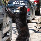 bear curiousity by dc witmer
