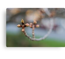 Welcome, Spring! Canvas Print