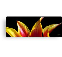 Tulip Tips Canvas Print