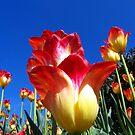 It's A Tulip Sky by Rick Lawler