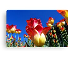 It's A Tulip Sky Canvas Print