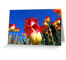 It's A Tulip Sky Greeting Card