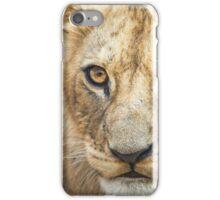 Lion Cub iPhone Case/Skin