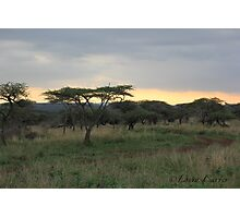 Safari Photographic Print