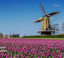 Typical Dutch.... by Adri  Padmos