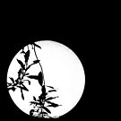 Leaf shadow by Alexander Meysztowicz-Howen
