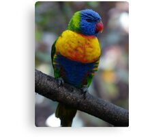 Lorikeet Parrot Canvas Print