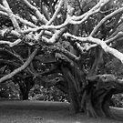 tree no.1 version 2 by dennis william gaylor