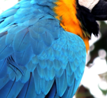 Macaw parrot Sticker