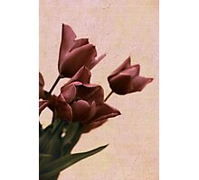 Tulip Treatment Photographic Print