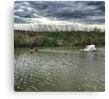 Goose Chase, Kennet And Avon Canal Canvas Print